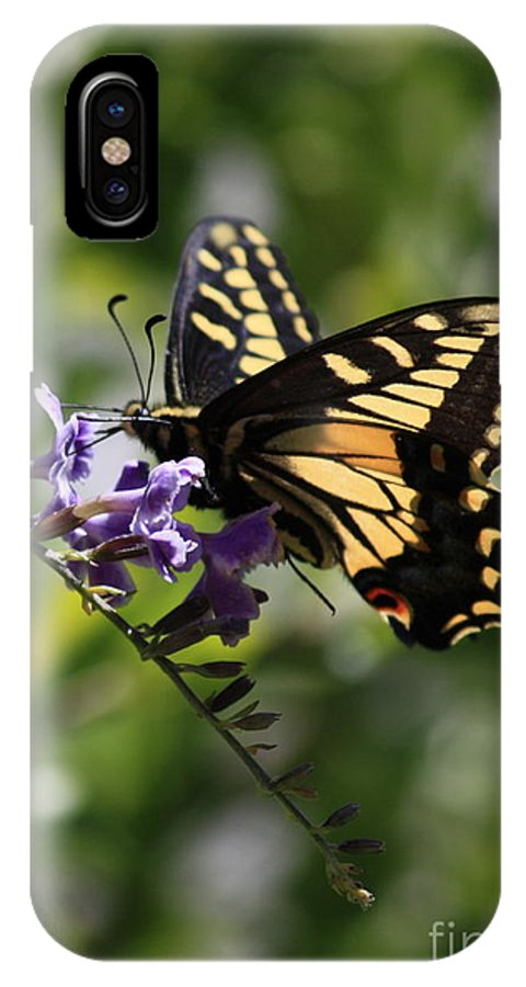 Swallowtail Butterfly IPhone X Case featuring the photograph Swallowtail Butterfly 1 by Carol Groenen