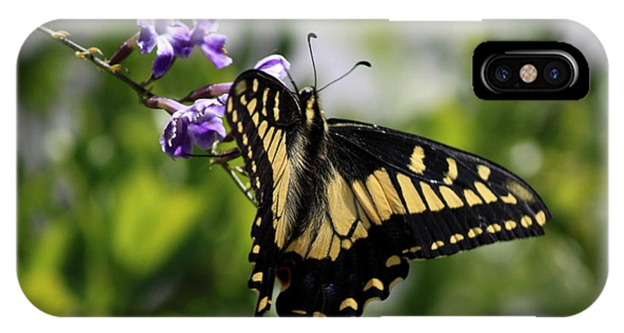 Swallowtail Butterfly IPhone X Case featuring the photograph Swallowtail Butterfly 2 by Carol Groenen