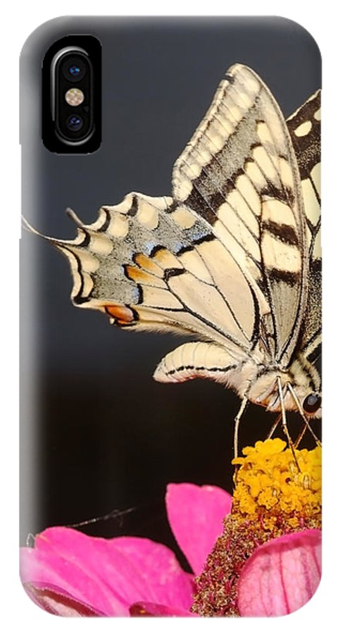 Swallowtail IPhone X Case featuring the photograph Swallowtail On Pink Flower by Cliff Norton