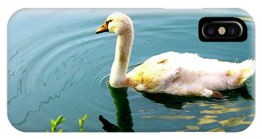 Swan Cygnet IPhone X / XS Case featuring the photograph Swan Cygnet By Earl's Photography by Earl Eells a
