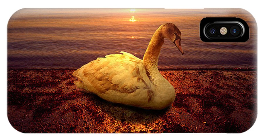 Animal IPhone Case featuring the photograph Swan Lake by Yuri Lev