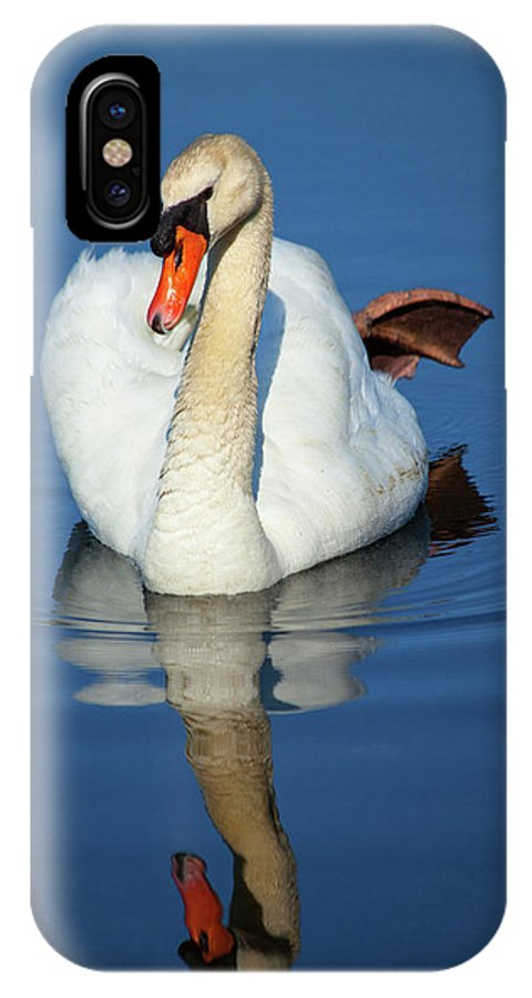 Swan IPhone X Case featuring the photograph Swan Reflection by Karol Livote