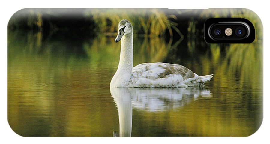 Swan IPhone Case featuring the photograph Swan Reflection by Steve Somerville