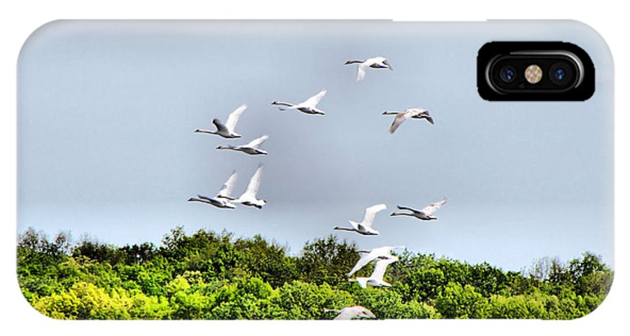 Swans IPhone X Case featuring the photograph Swans In Flight by September Stone