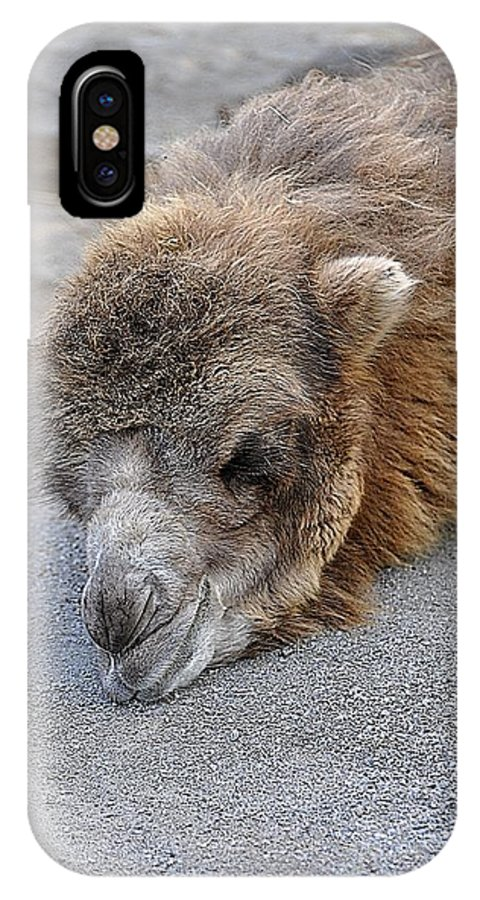 Animals IPhone X Case featuring the photograph Sweet Dreams by Jan Amiss Photography