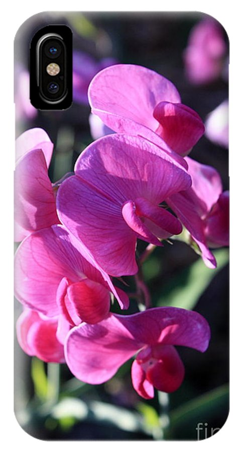 Sweet Pea IPhone X Case featuring the photograph Sweet Pea by Carol Groenen