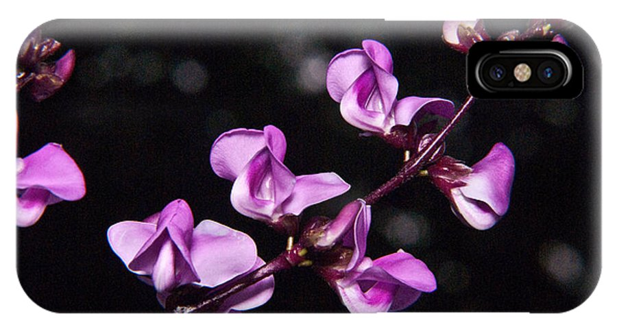 Sweet IPhone X Case featuring the photograph Sweet Pea Morning by Douglas Barnett