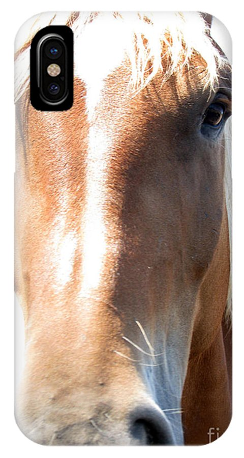 Horse IPhone Case featuring the photograph Sweetie by Amanda Barcon