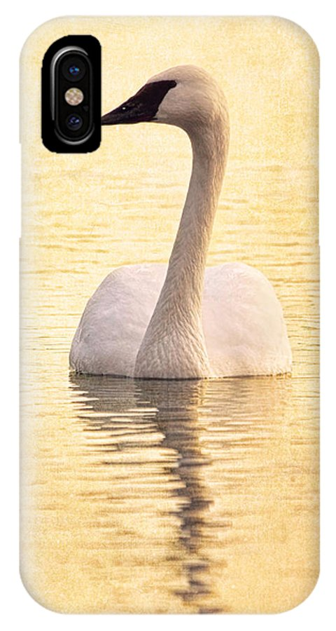 Trumpeter Swan IPhone X Case featuring the photograph Swimming In Light B by Theo O'Connor
