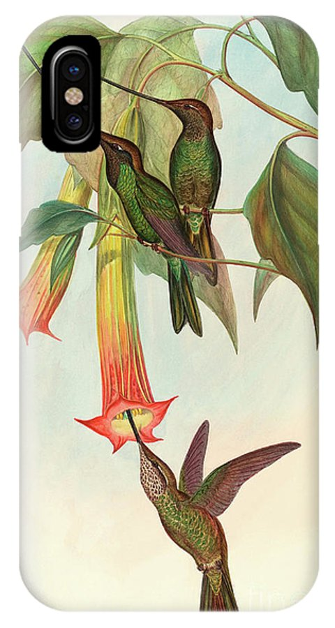 Hummingbird IPhone X Case featuring the painting Sword Billed Hummingbird by John Gould