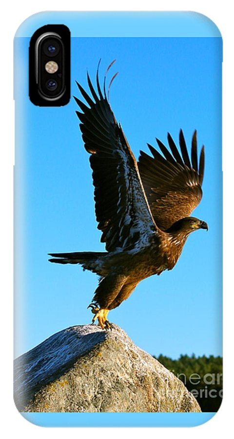 Bald Eagle IPhone X Case featuring the photograph Taking Flight by Steven Bachmann