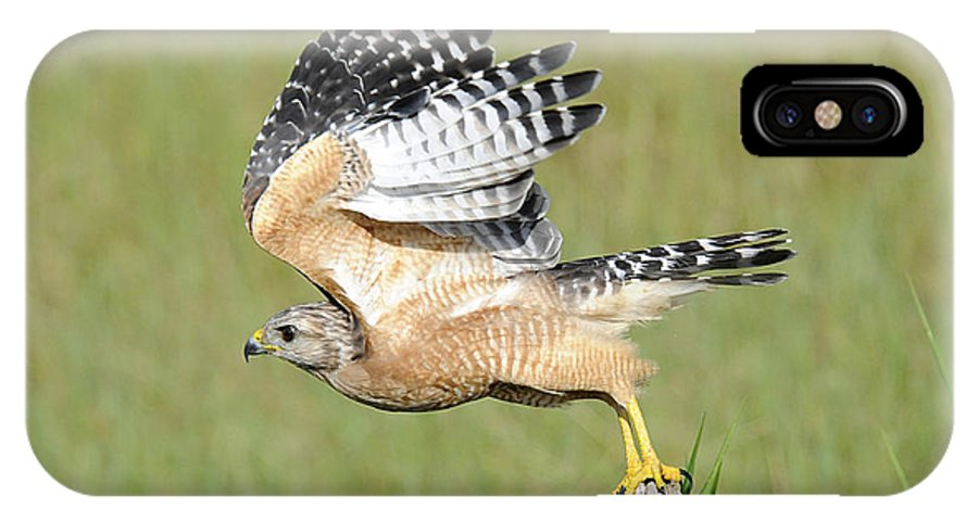 Red Tailed Hawk IPhone X Case featuring the photograph Taking Flight by Keith Lovejoy