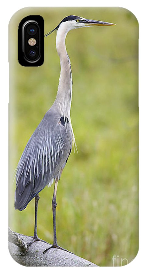 Bird IPhone X Case featuring the photograph Taking In The Scenery by Deborah Benoit