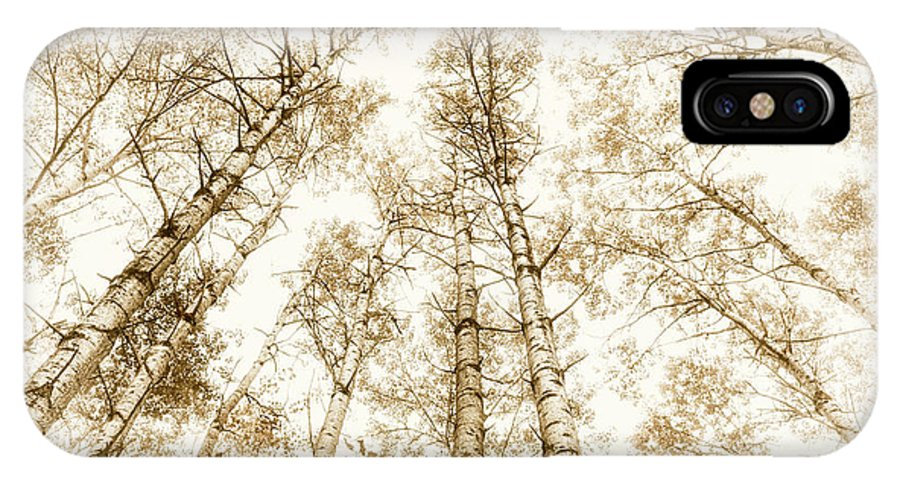 Trees IPhone X Case featuring the photograph Tall Aspens by Elena Elisseeva