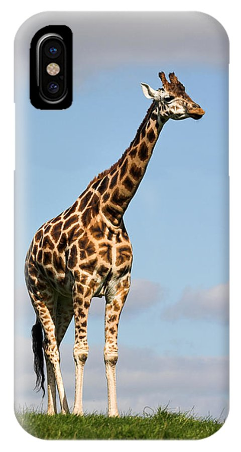 Giraffe IPhone X Case featuring the photograph Tall Giraffe In A Field Fota Ireland by Pierre Leclerc Photography