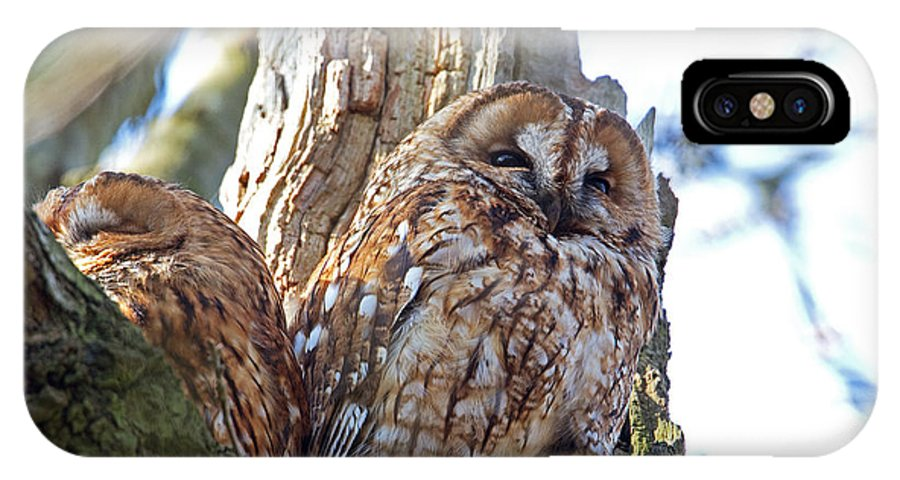 Tawny Owl IPhone X Case featuring the photograph Tawny Owls by Bob Kemp