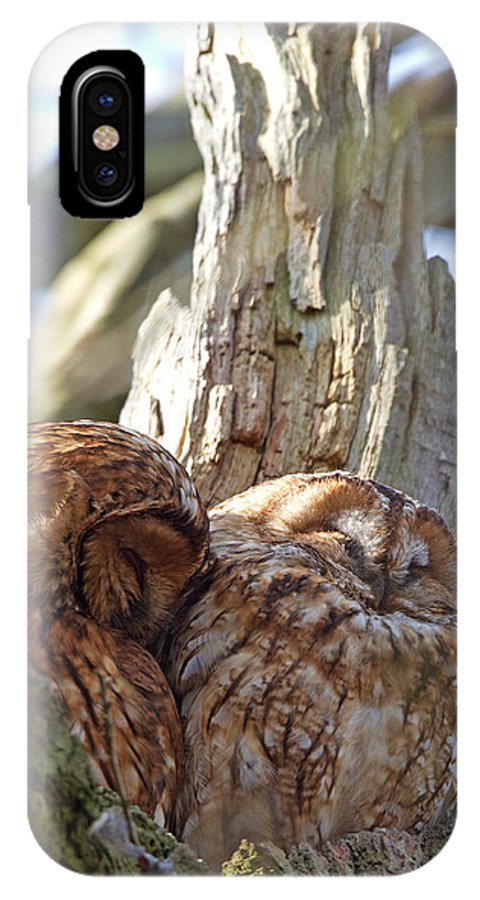 Tawny Owl IPhone X Case featuring the photograph Tawny Owls In Love by Bob Kemp