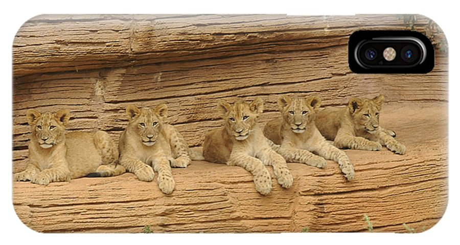 Lions IPhone X Case featuring the photograph Teach Us by Keith Lovejoy