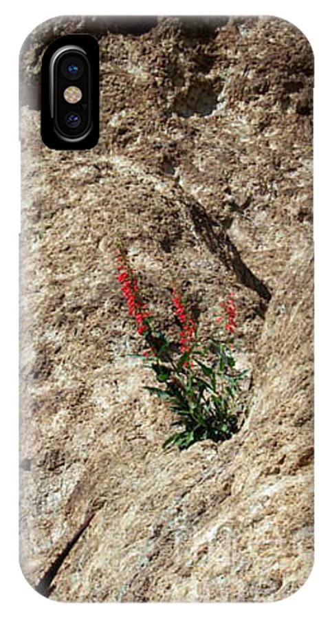 Wildflowers; Flowers IPhone X Case featuring the photograph Tenacity by Kathy McClure