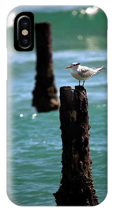 Tern IPhone X Case featuring the photograph Tern Gulfstream Florida by Michelle Constantine