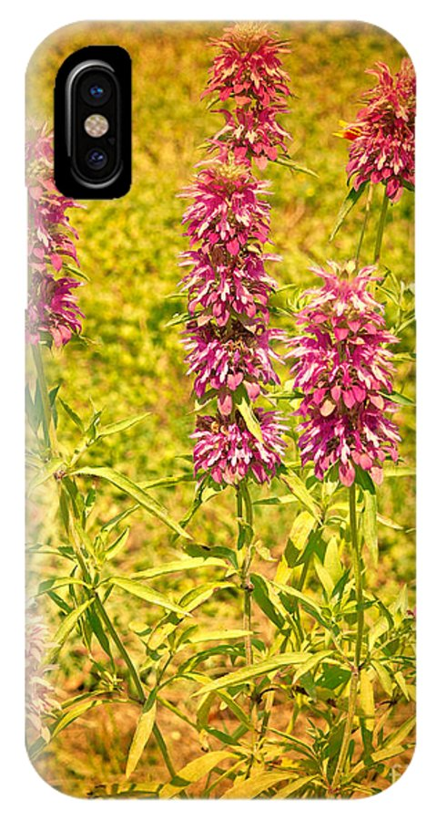 Beebalm IPhone X Case featuring the photograph Texas Beebalm by Gary Richards