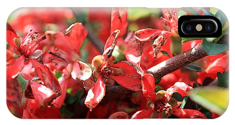 Spring Flowers IPhone X Case featuring the photograph Texas Quince by David Bearden