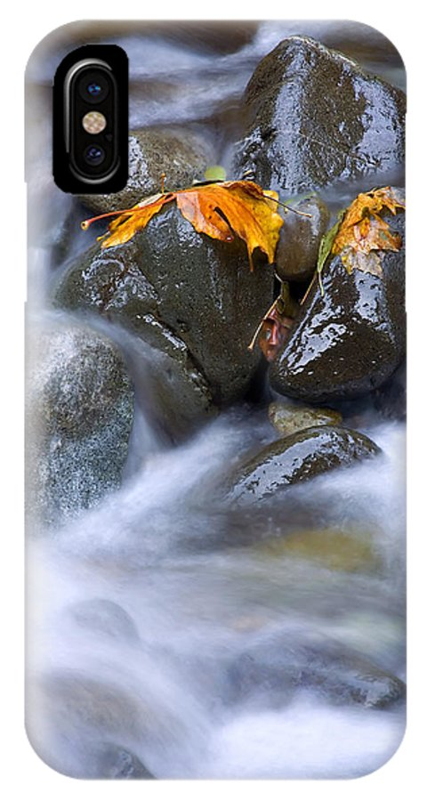 Maple IPhone X Case featuring the photograph Textures Of Autumn by Mike Dawson