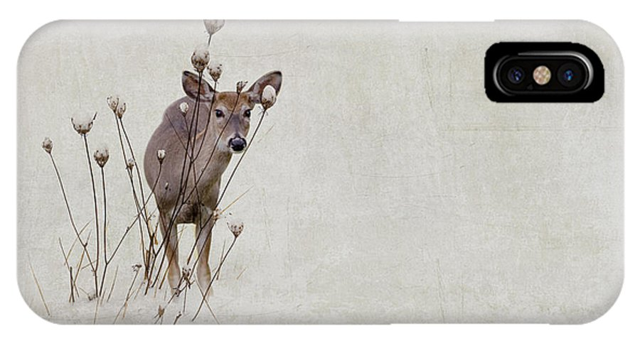 Winter IPhone X Case featuring the photograph Thanksgiving Visitor by Ron Jones