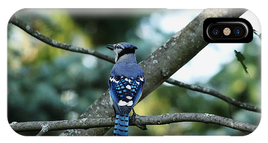 Blue Jay IPhone X Case featuring the photograph The Blues Song by Debbie Oppermann