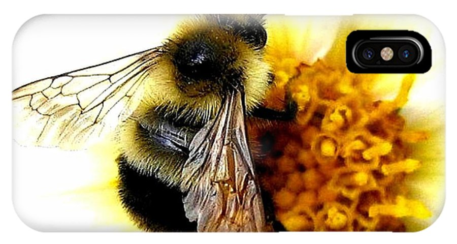 Honeybee IPhone X Case featuring the photograph The Buzz by Will Borden