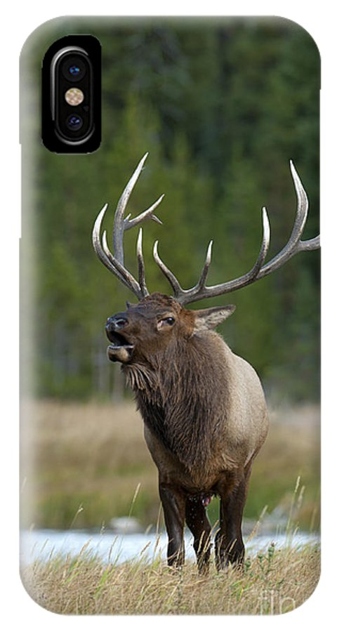 Yellowstone IPhone X Case featuring the photograph The Challenger by Sandra Bronstein