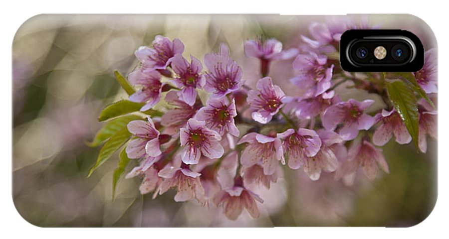 Garden IPhone X / XS Case featuring the photograph The Cherry by Rossana Magri