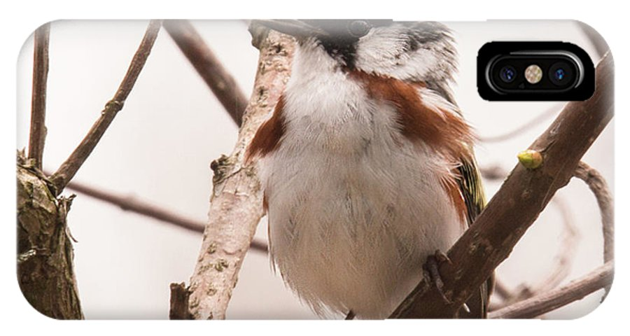 Chestnut IPhone X / XS Case featuring the photograph The Chestnut Warbler by Mark Stephens