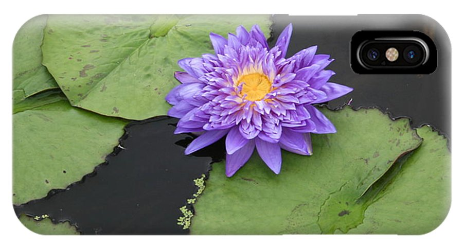Lily IPhone X / XS Case featuring the photograph The Color Of Splendor by David Dunham