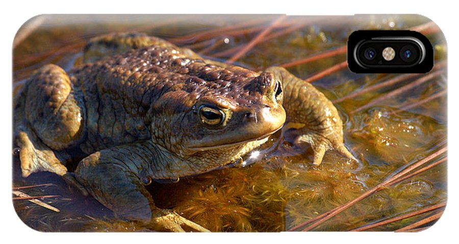 Lehtokukka IPhone X Case featuring the photograph The Common Toad 1 by Jouko Lehto