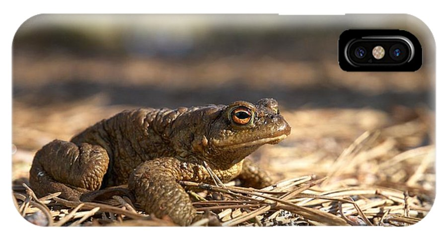 Seitseminen IPhone X Case featuring the photograph The Common Toad 4 by Jouko Lehto
