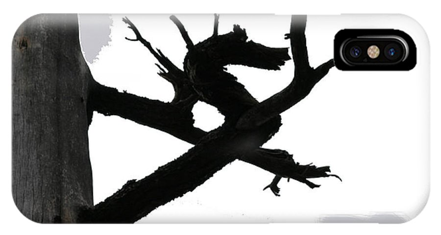 Dragon IPhone X Case featuring the photograph The Dragon Tree by Sin D Piantek