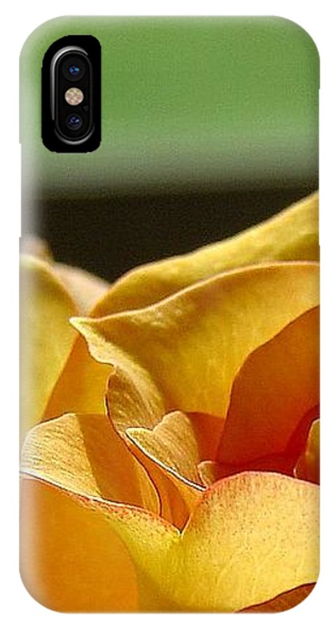 Rose Yellow IPhone Case featuring the photograph The Edge Of Yellow by Luciana Seymour