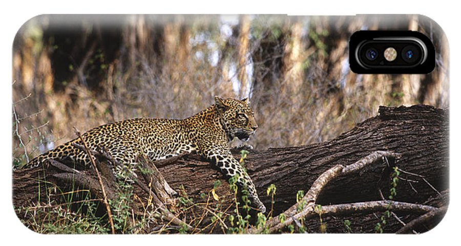 Africa IPhone X Case featuring the photograph The Elusive Leopard by Sandra Bronstein