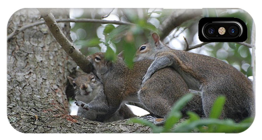 Squirrels IPhone X Case featuring the photograph The Fight For Life by Rob Hans