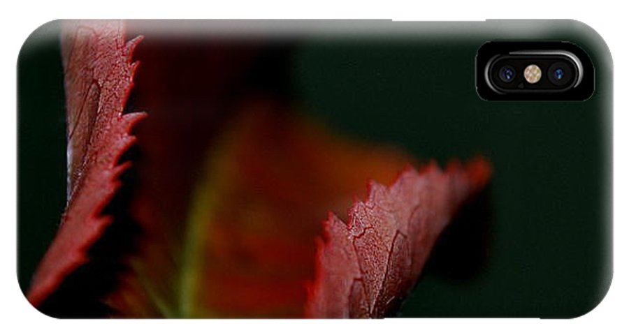 Nature IPhone X Case featuring the photograph The First Day Of Fall by Marija Djedovic