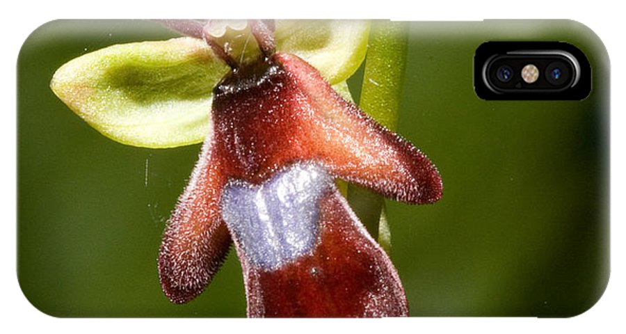 Fly IPhone X Case featuring the photograph The Fly Orchid by Bob Kemp