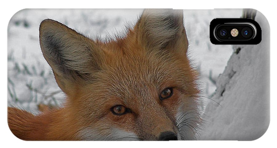 Red Fox IPhone X Case featuring the photograph The Fox 4 by Ernie Echols