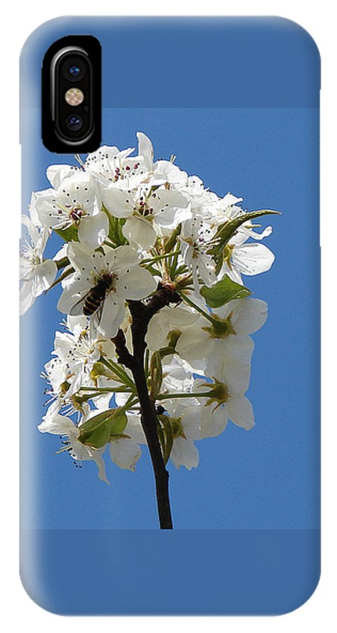 IPhone Case featuring the photograph The Fruits Of Spring by Luciana Seymour