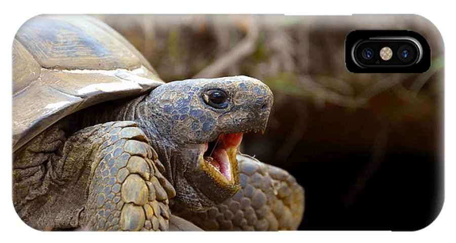 Gopher Tortoise IPhone X Case featuring the photograph The Great Gopher Tortoise by David Lee Thompson