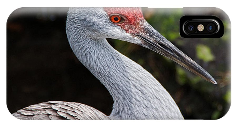 Bird IPhone Case featuring the photograph The Greater Sandhill Crane by Christopher Holmes