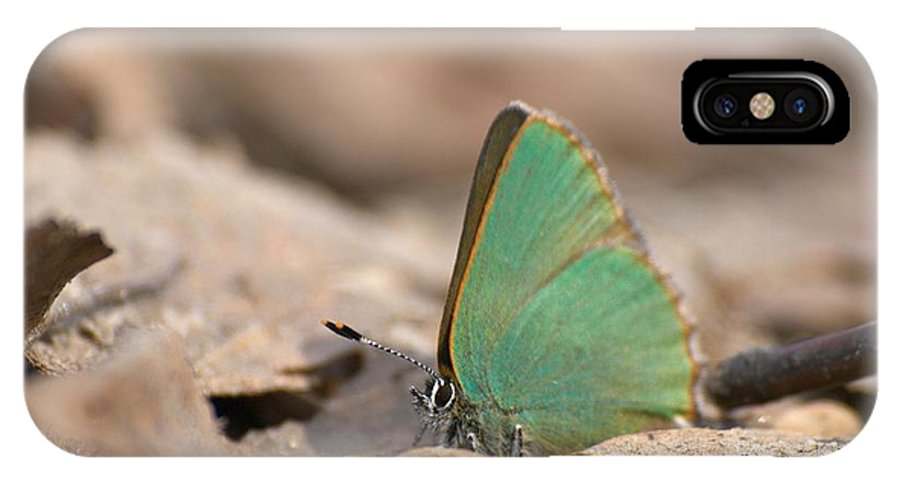 Lehtokukka IPhone X Case featuring the photograph The Green Hairstreak by Jouko Lehto