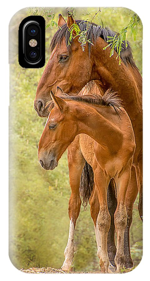 Colt IPhone X / XS Case featuring the photograph The Guardian by Sandy Klewicki