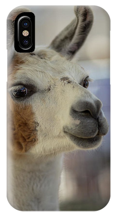Alpaca IPhone X Case featuring the mixed media The Haircut by Capt Gerry Hare