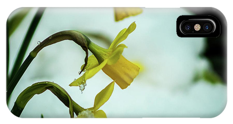 Daffodil IPhone X Case featuring the photograph The Hand Over by Robert Zeigler